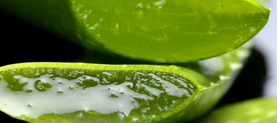 Benefits Of Aloe Vera Juice Or Gel For Hair